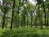 Végétalisation à Toulouse – Forêt d'arbres hauts et de fougères