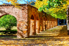 Végétalisation à Toulouse – Le cloitre de l'Université du Capitole en automne